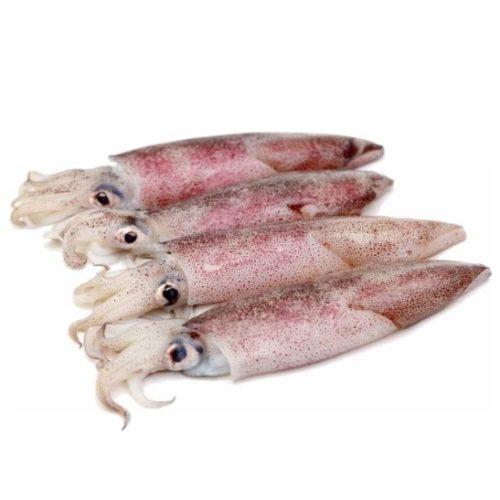 calamaro sud afr