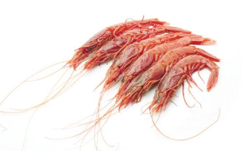 shrimp carabinero of red, a delicacy