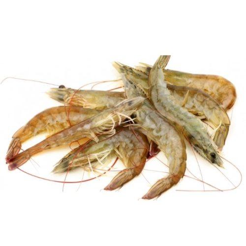 mazzancolla-dell-adriatico (1)
